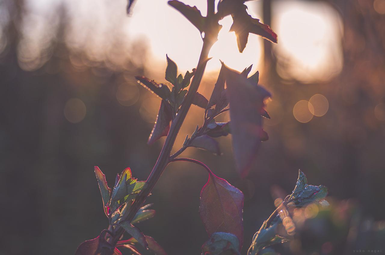 Leaves in morning light.
