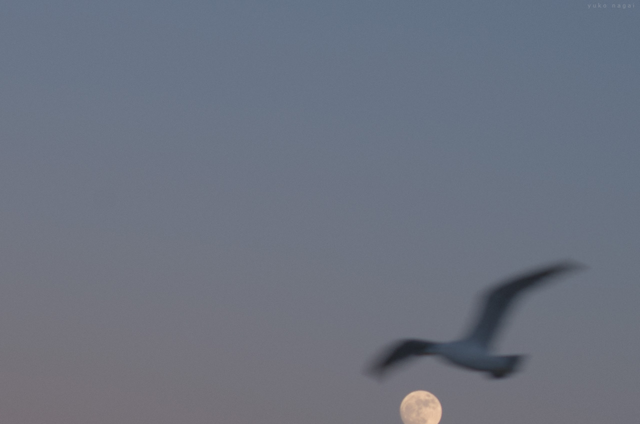 Full Moon with a gull.