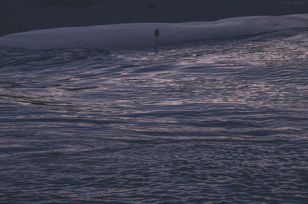 A water bird on sea shore.
