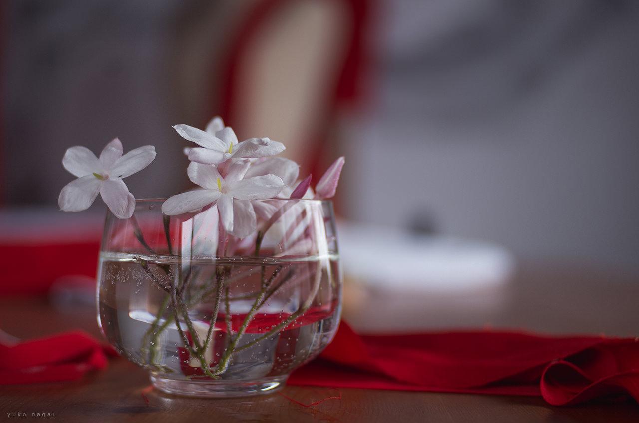 Jasmine flowers in art studio.