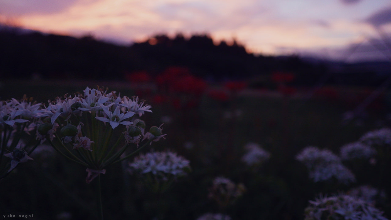 Wild flowers at sunset.