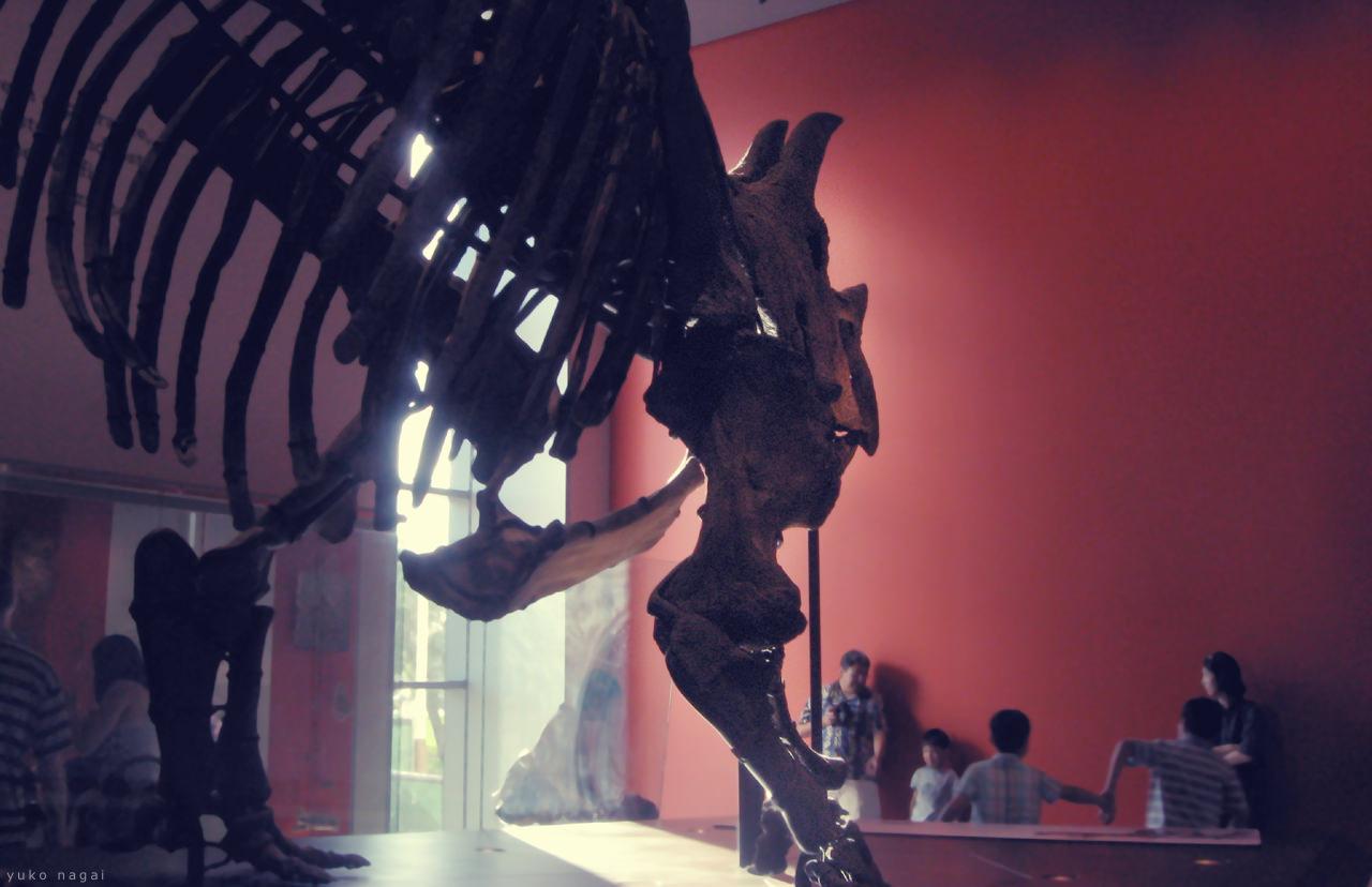 Museum dinosaur skeleton.