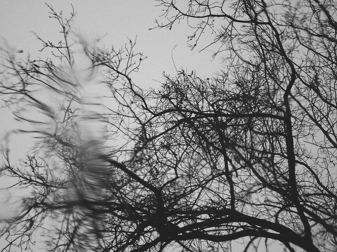 A tree in rain through a windshield.
