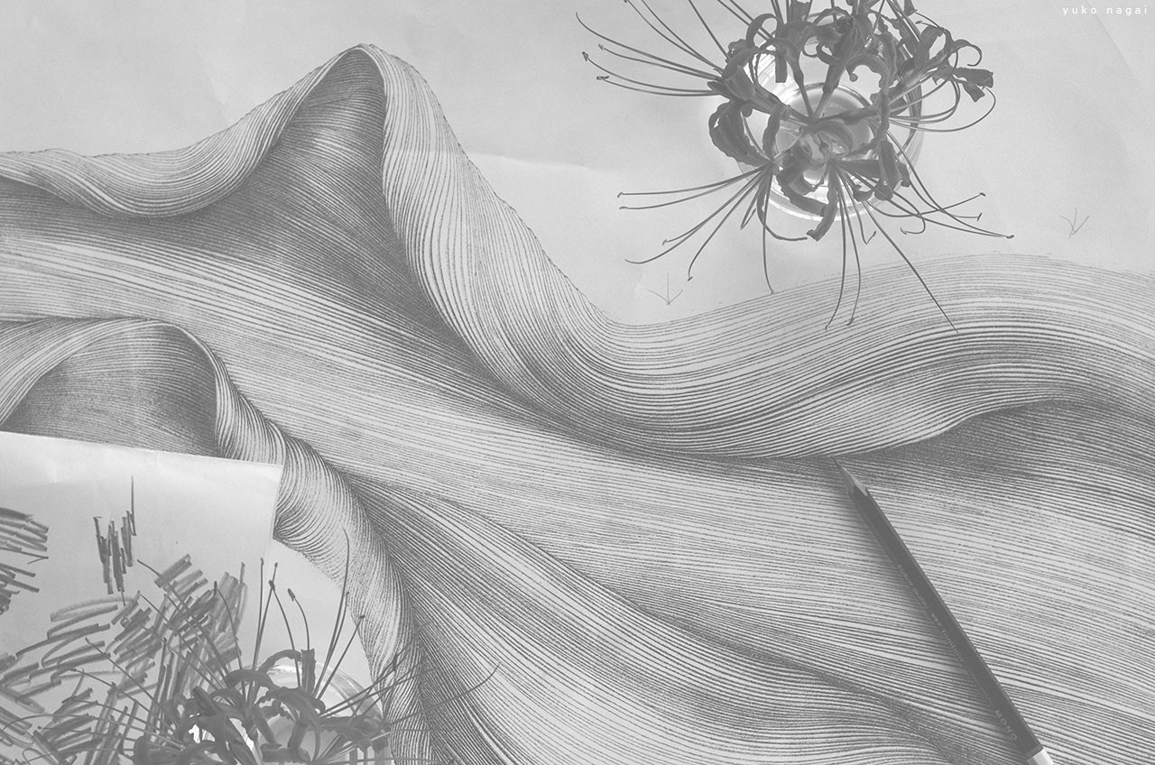 Spider lily blossoms and a drawing.