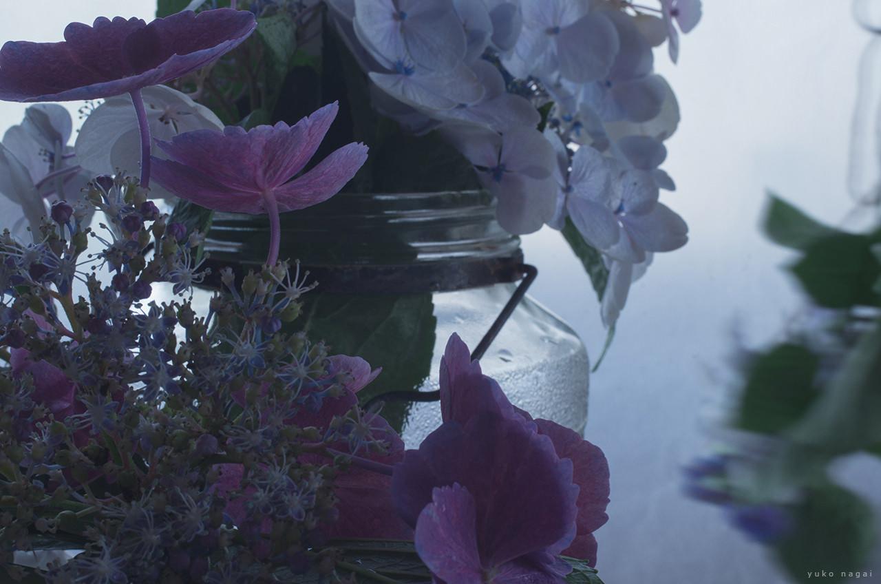 Hydrangea blossoms in glass vase.