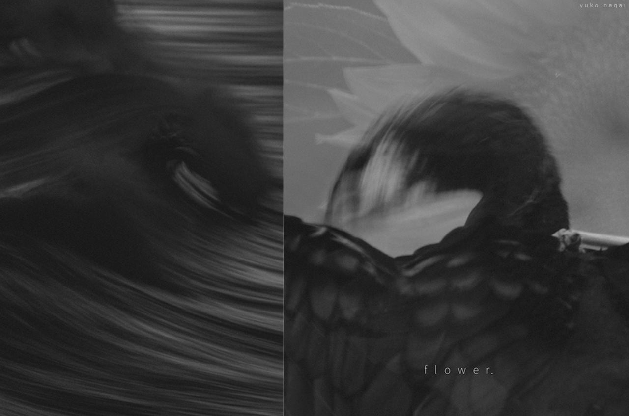 A Wave, Cormorant Wings and a Sunflower.
