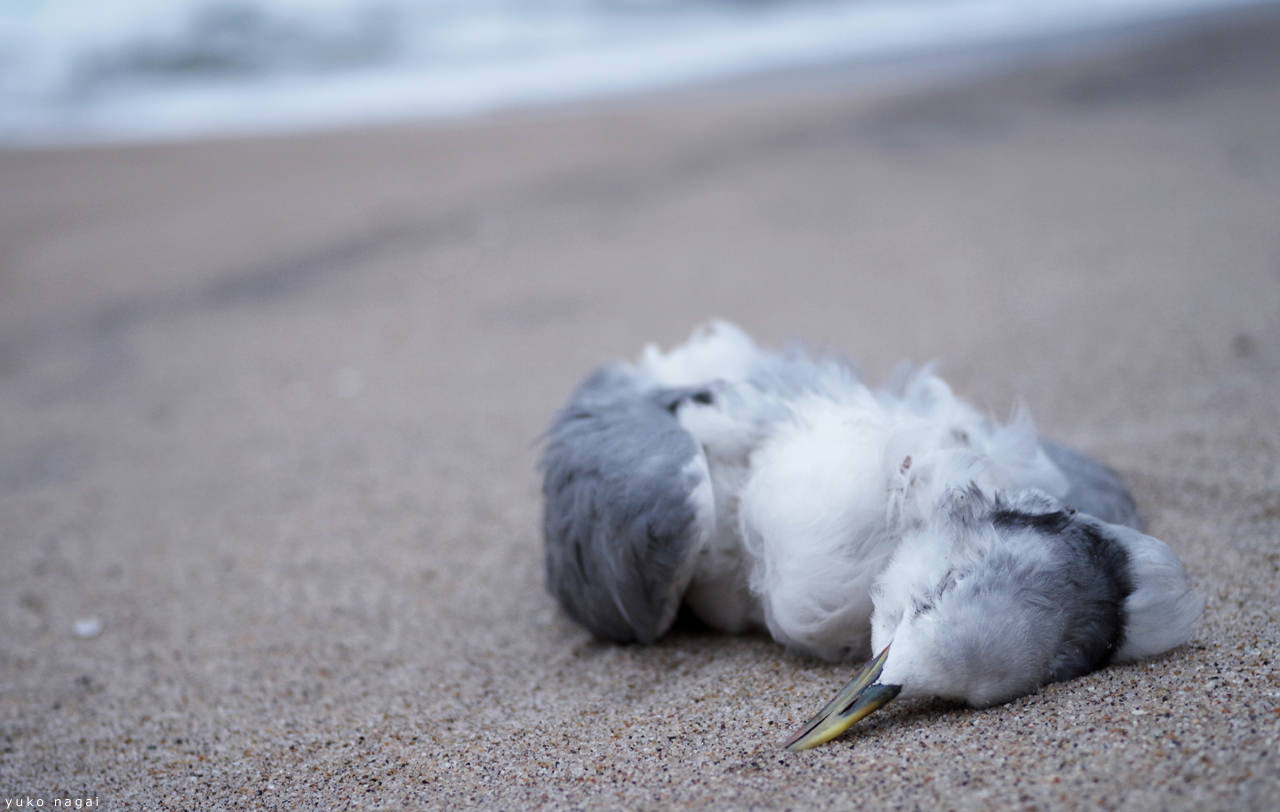 A dead gull on the shore.