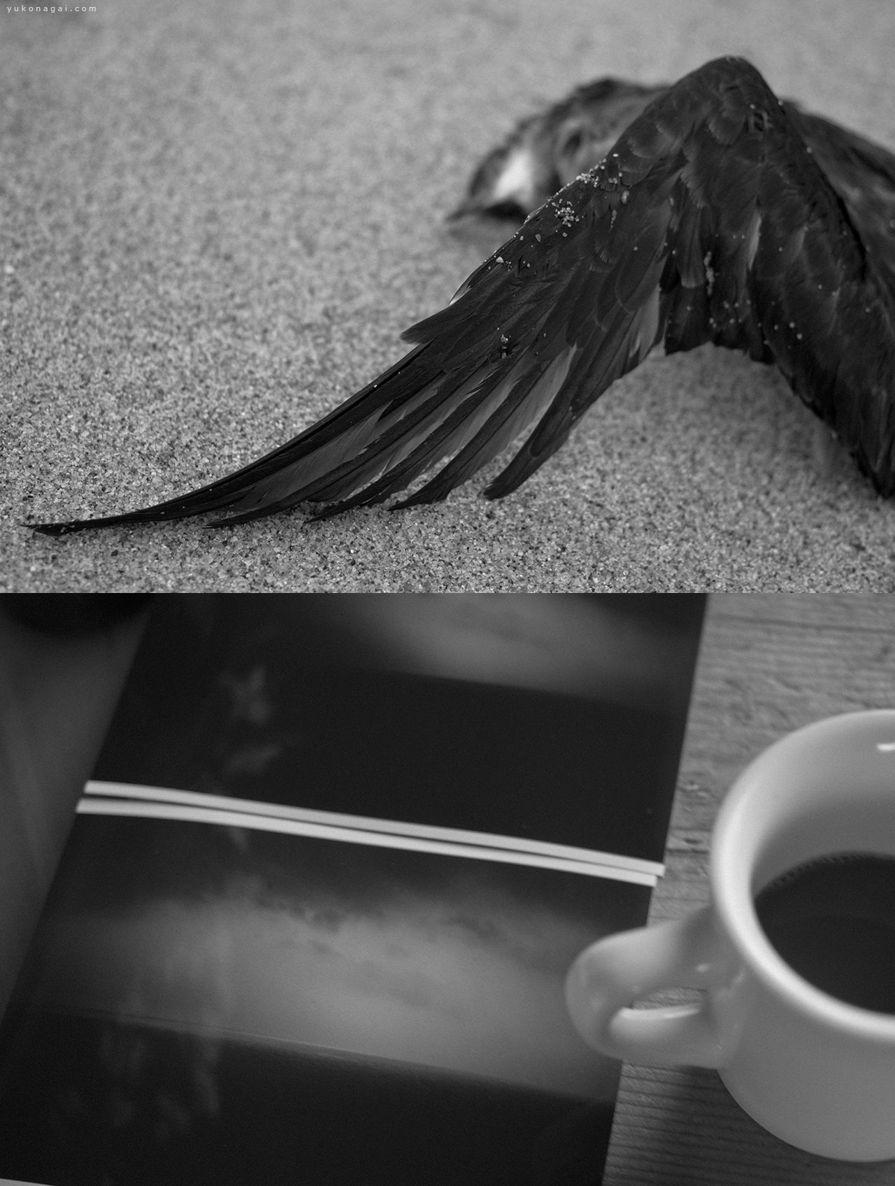 A bird wing and photographic prints of ocean horizons.