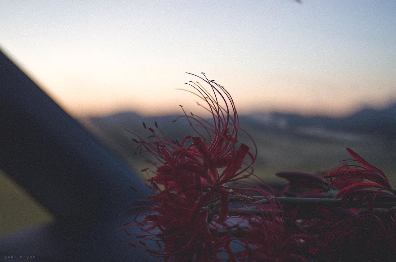 A lily bouquet by a car window.