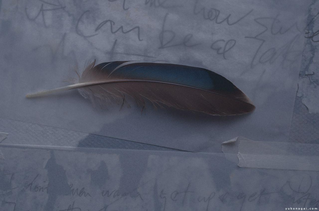 A bird feather.