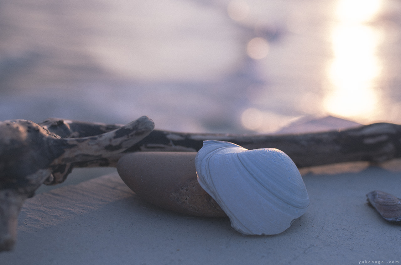 Ocean worn found objects.