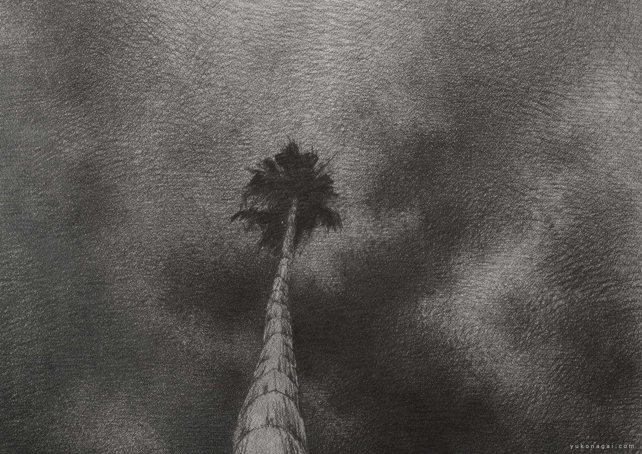 A pencil drawing of a palm tree and clouds.