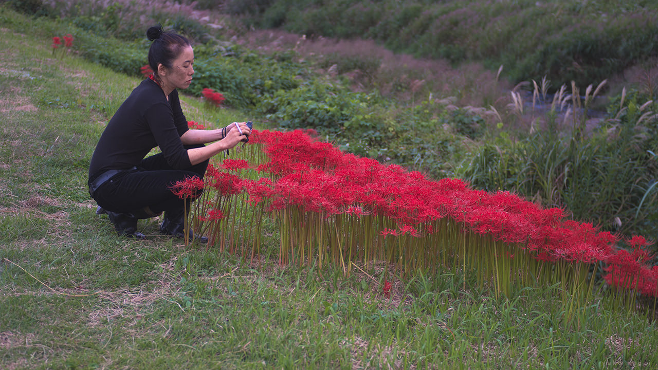 Artist at work with red spider lilies.