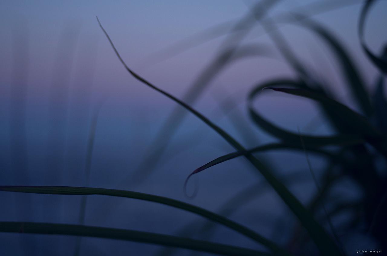 Grass leaves at sundown by ocean.