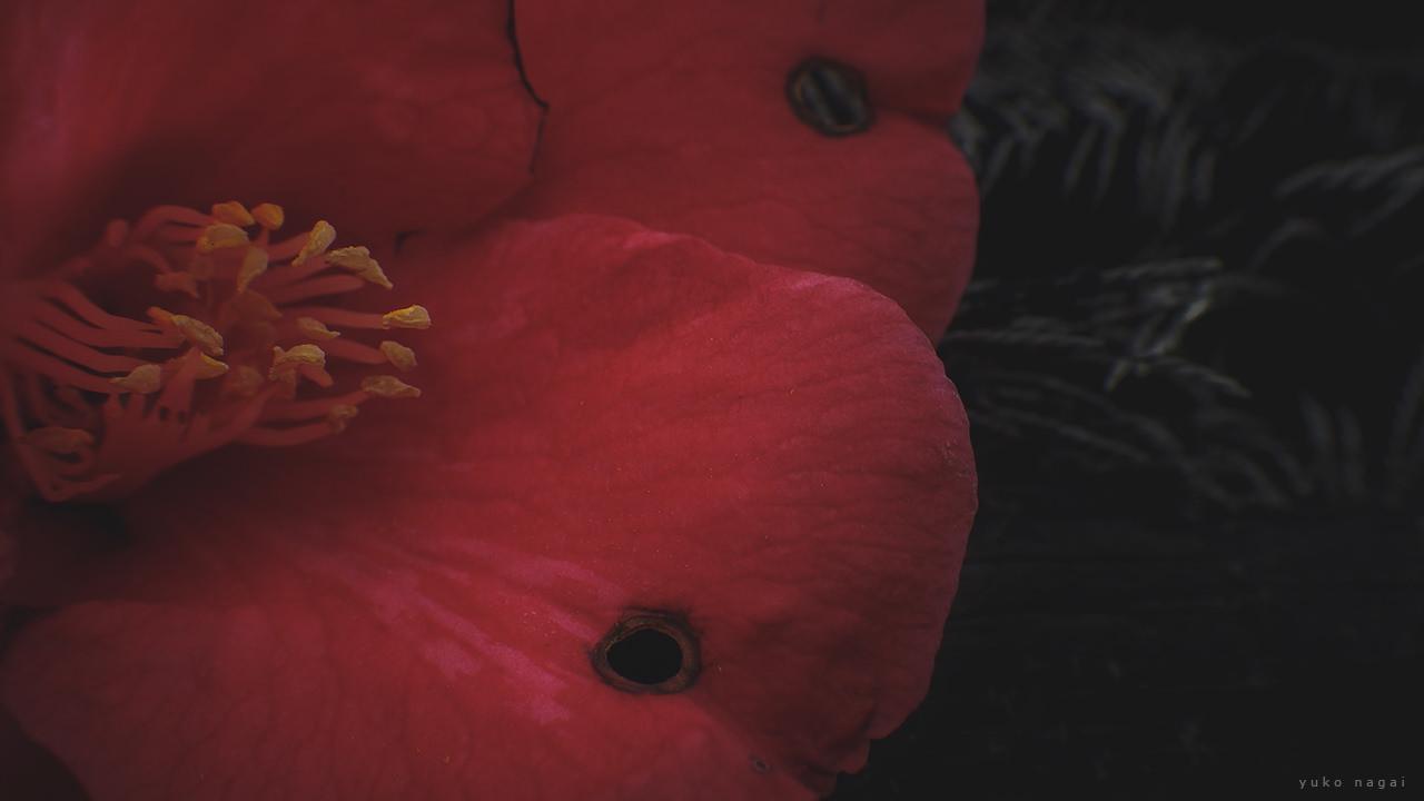 A camelia blossom detail.