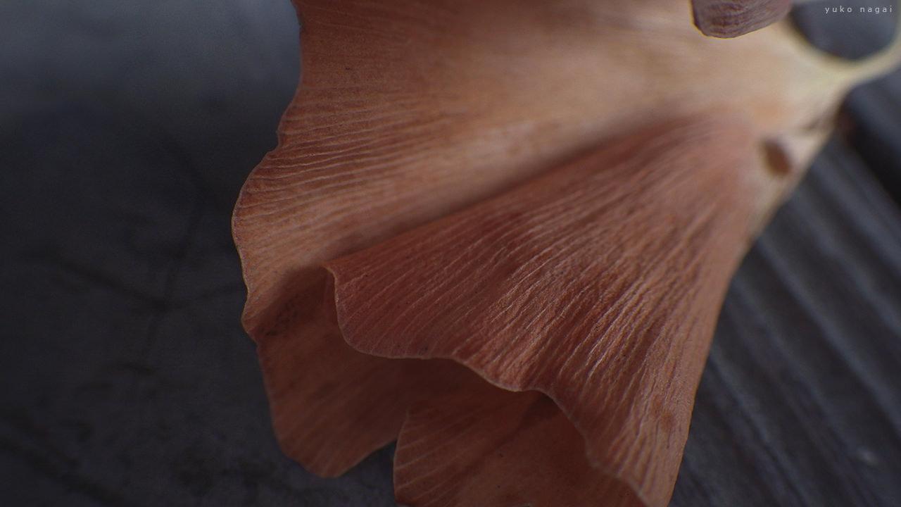 A dried ginkgo leaf detail.