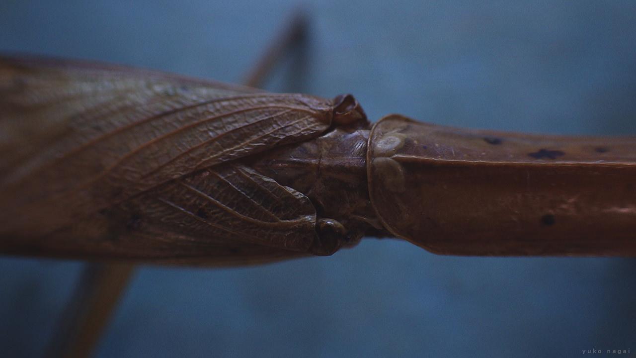A praying mantis waist detail.