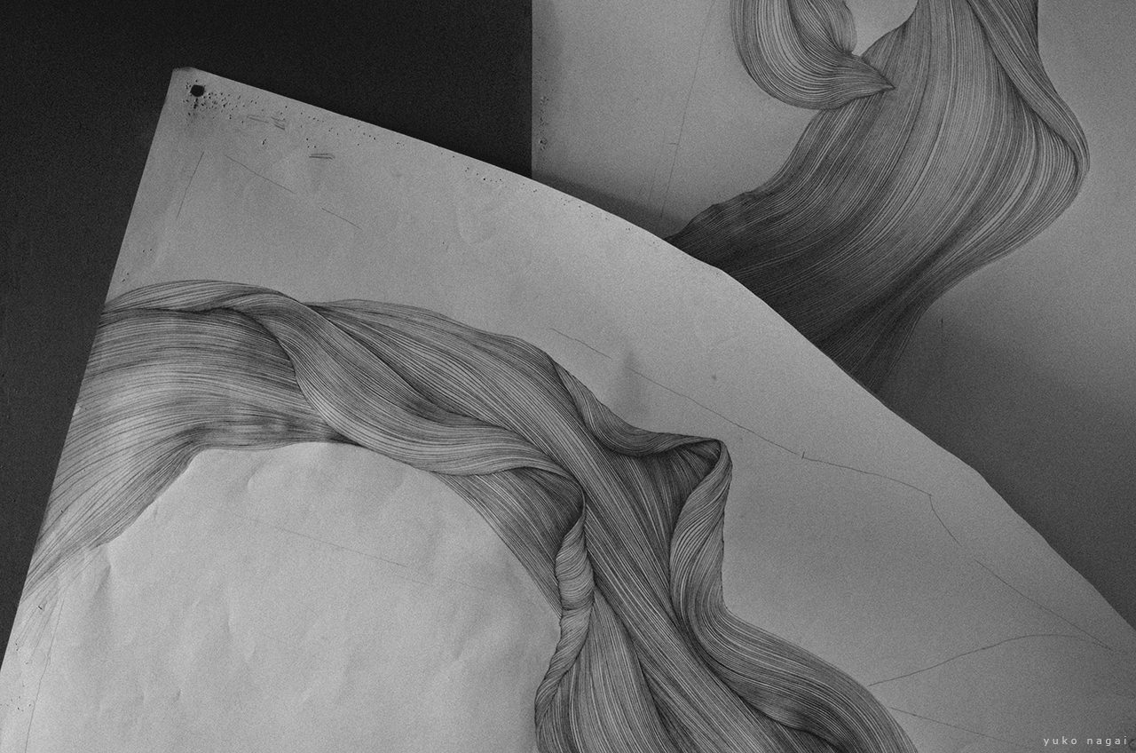 Pencil drawings of a spider lily petal in progress.