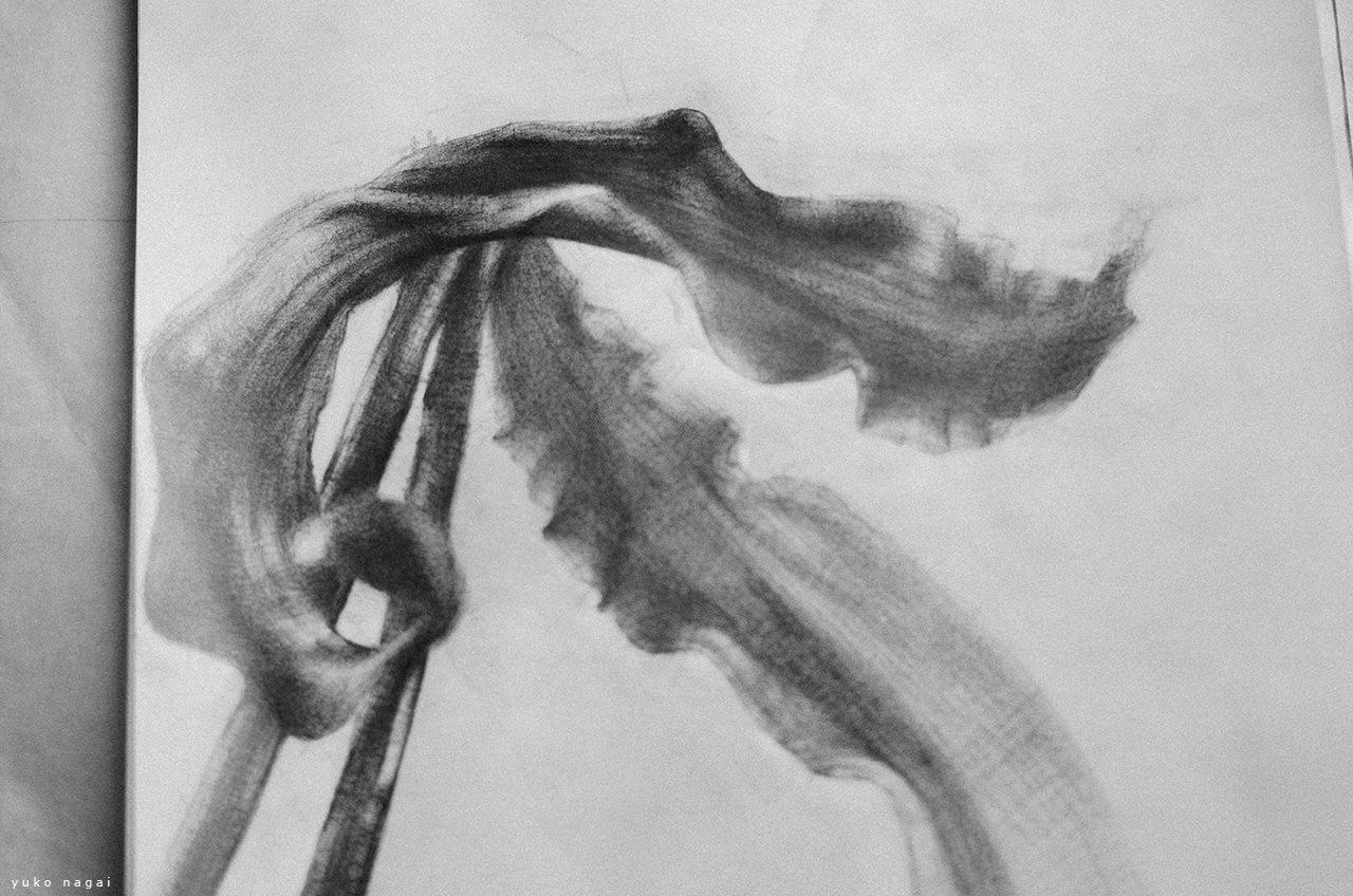 A pencil drawing of spider lily petals.