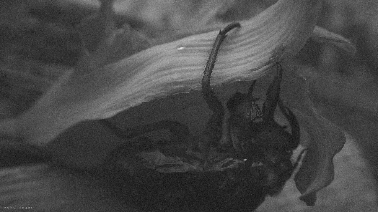 A Cicada Shell on Tiger Daylily.