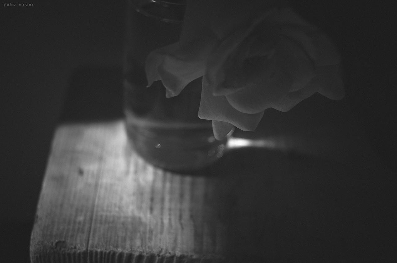 A Gardenia blossom.
