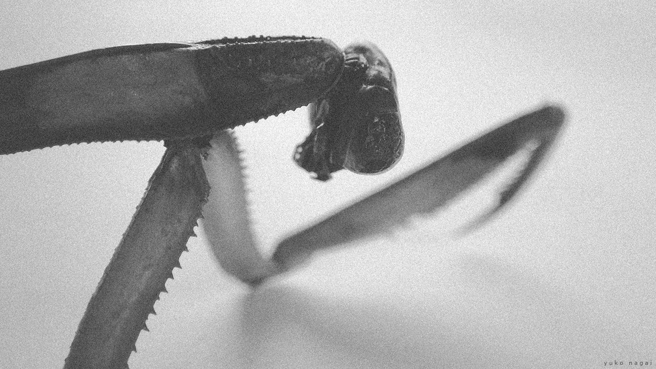 Praying Mantis, an upper torso detail.