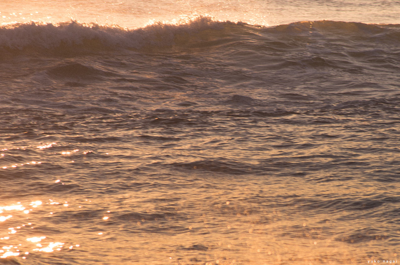 A forming wave in morning light.