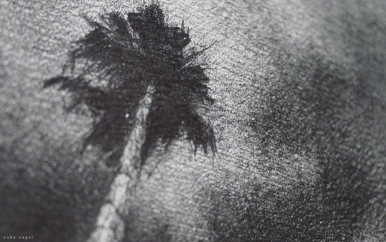 A pencil drawing of a palm tree.