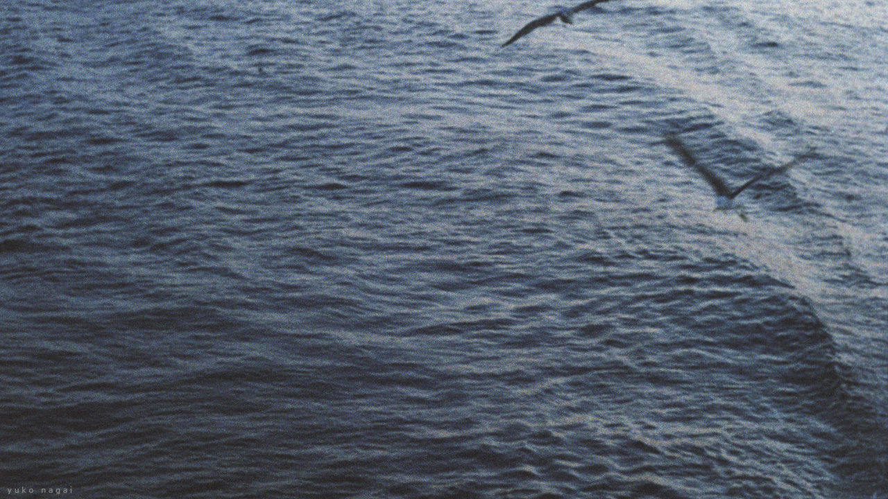 Sea gulls over water surface.