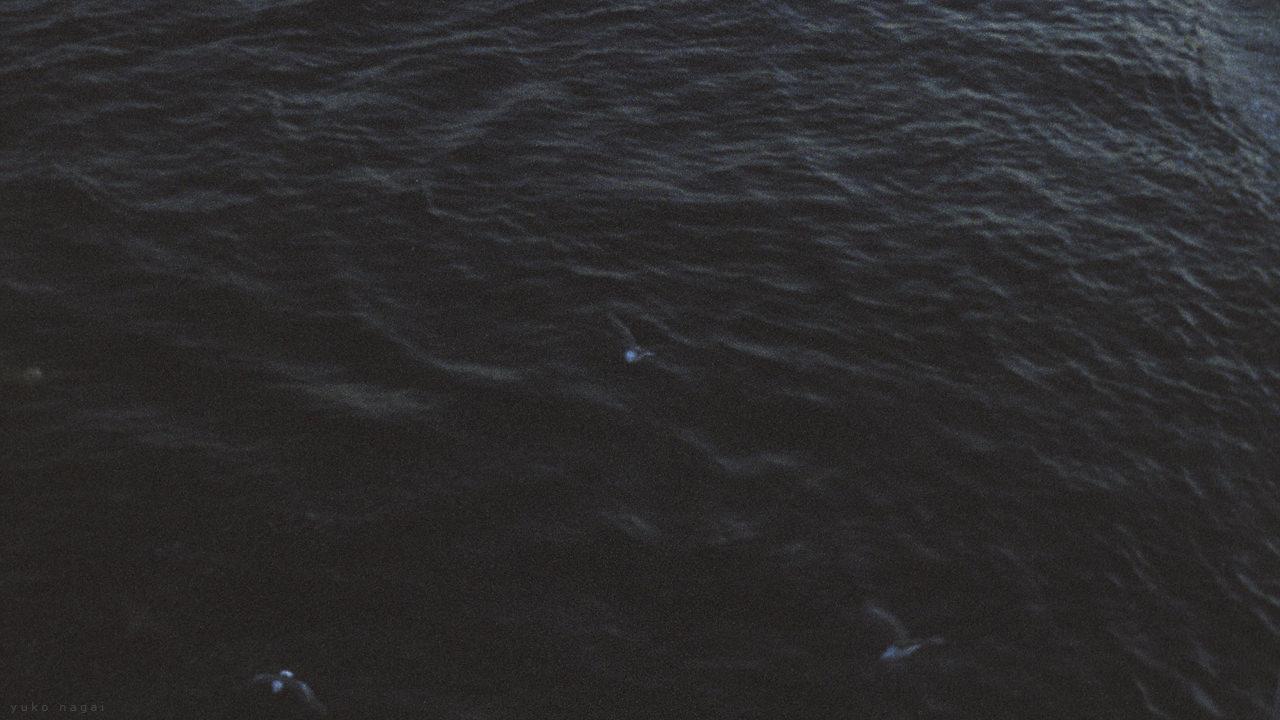 Sea gulls over dark water surface.