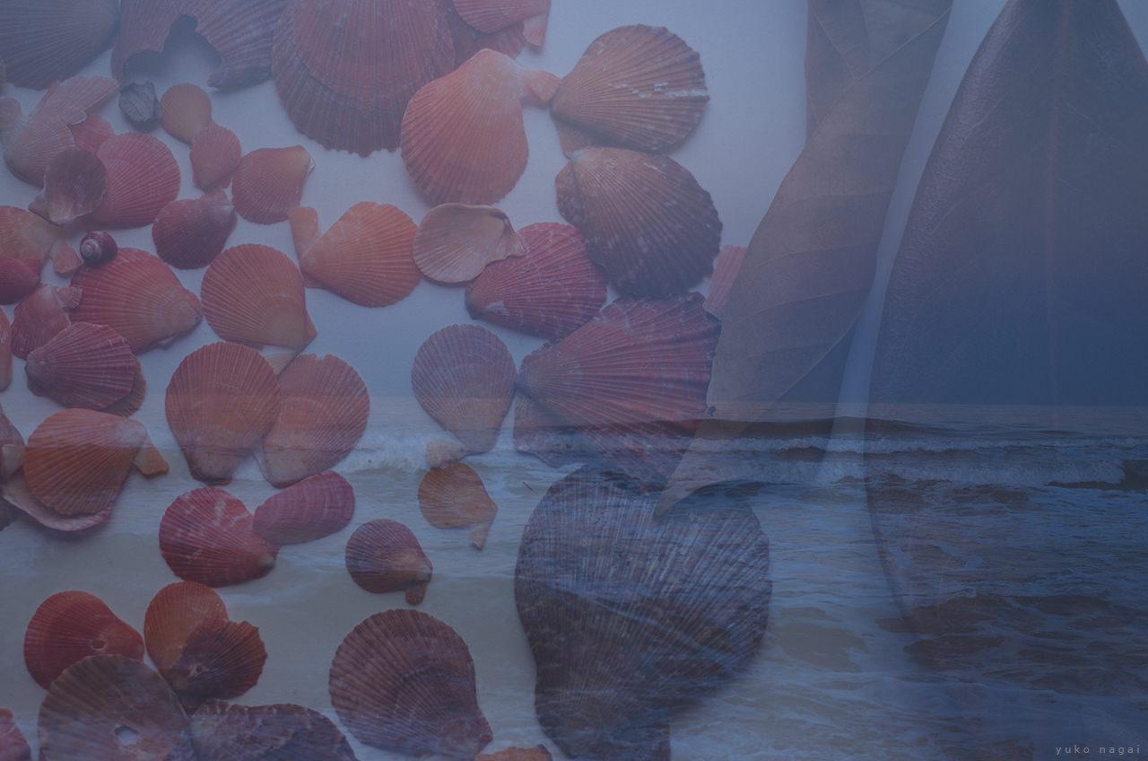 Sea shells with sea shore.