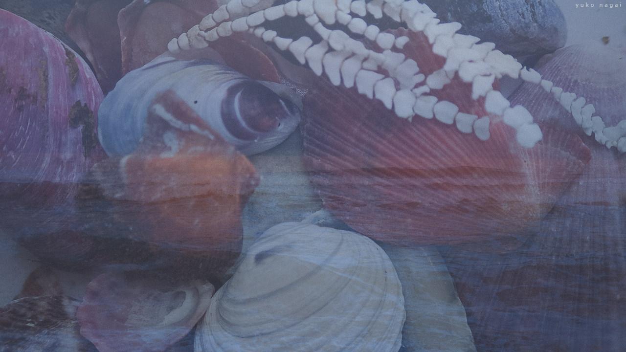 Sea shells layered with sea shore.