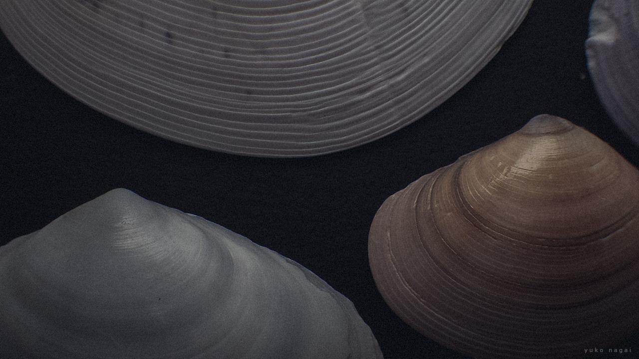 Flat sea shells.