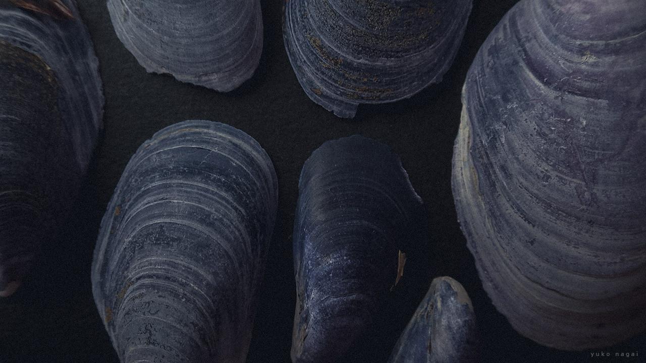 Blue mussel sea shells.
