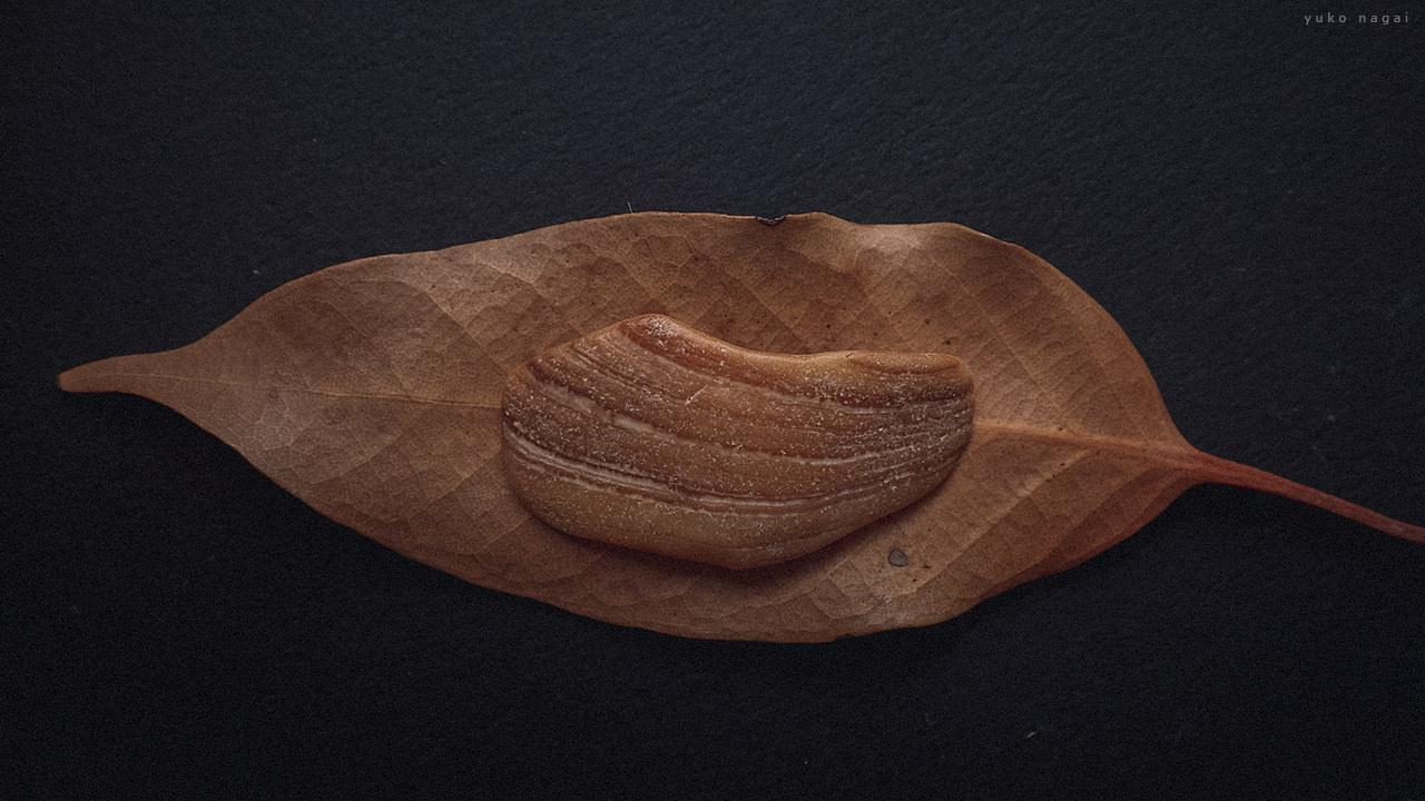 A sea shell piece on a leaf.