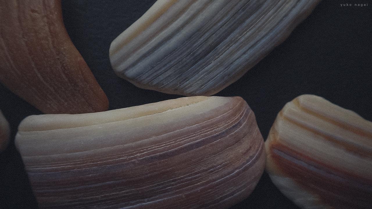 Sea shell blocks.