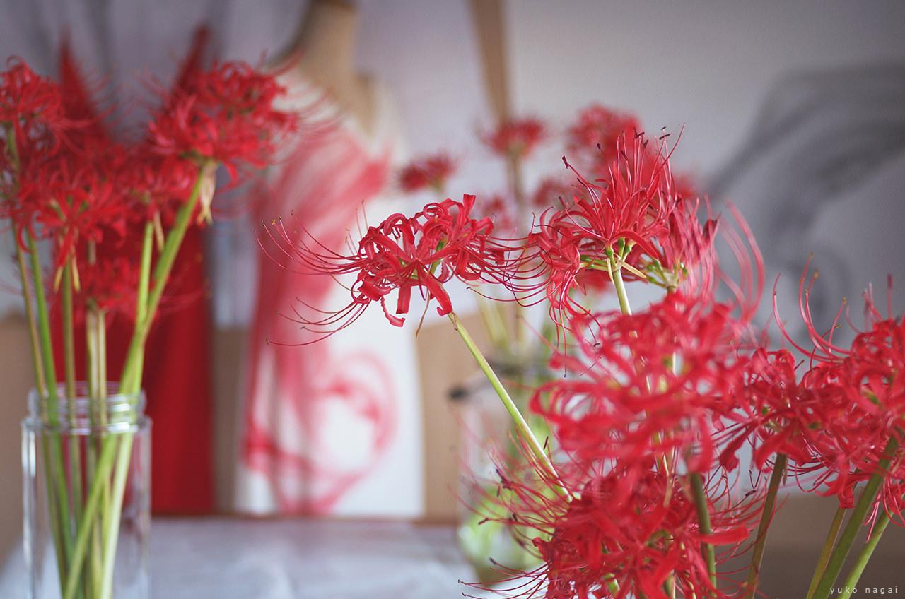 Spider lily bouquets in artist studio.