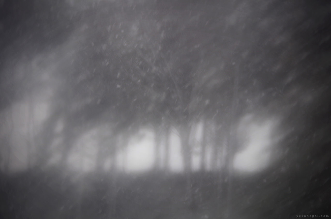 Snow Storm in Forest.