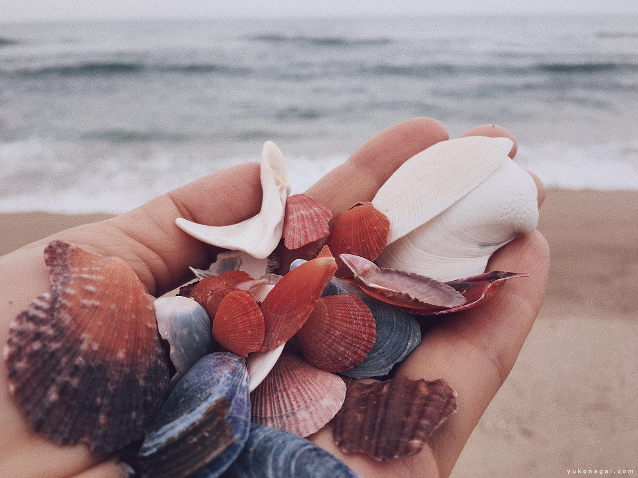 Sea shells in a cupped hand.