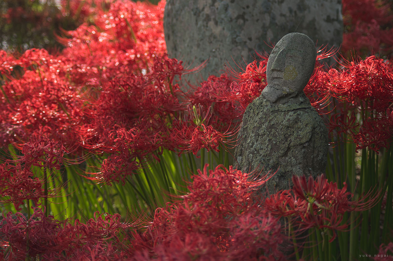 Red spider lilies and a rock statue.