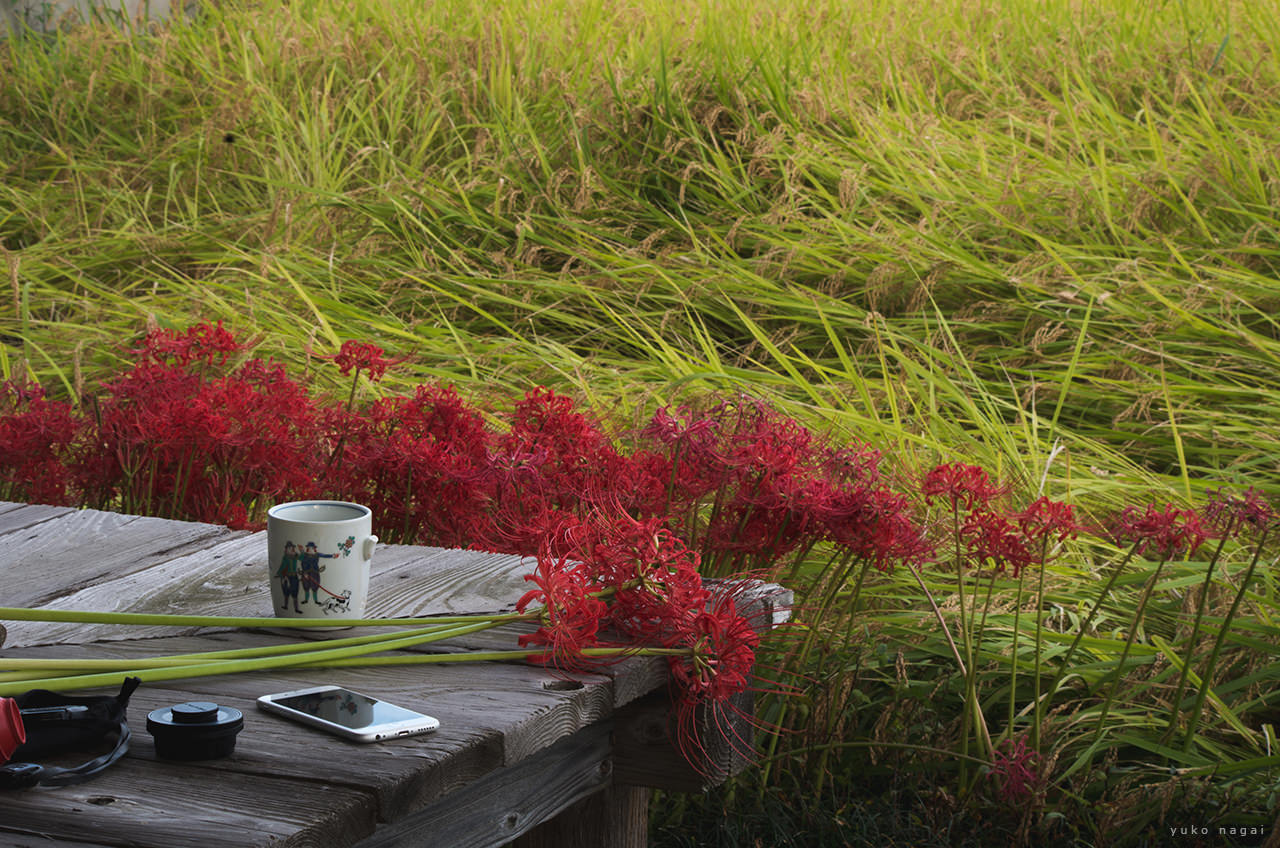 Red spider lilies and a coffee cup.