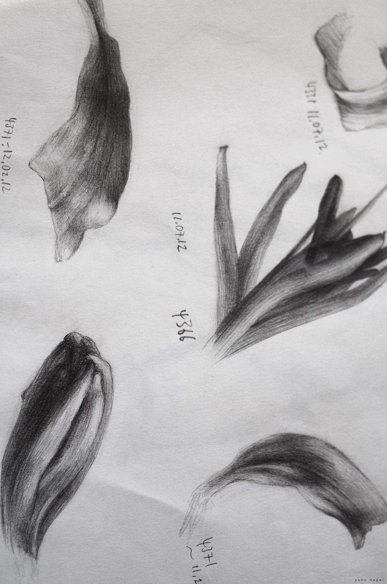 Flower pencil sketches.