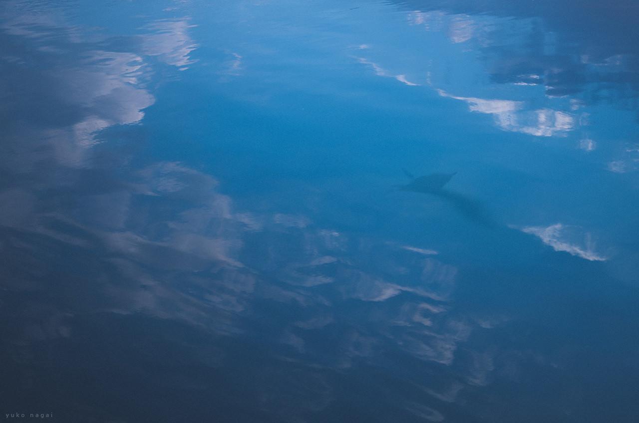 A bird reflection on sea surface.