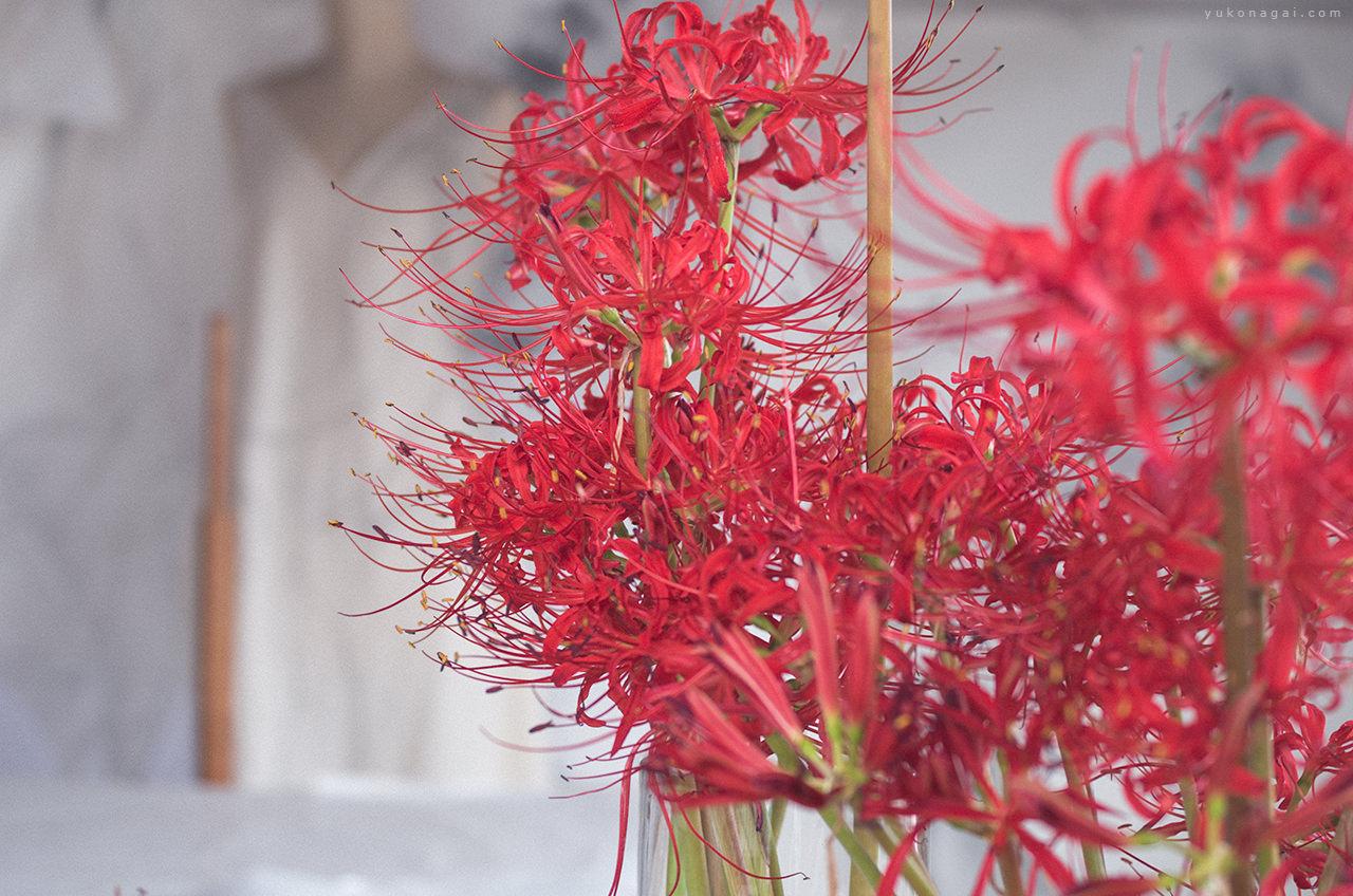 Art studio with spider lilies.