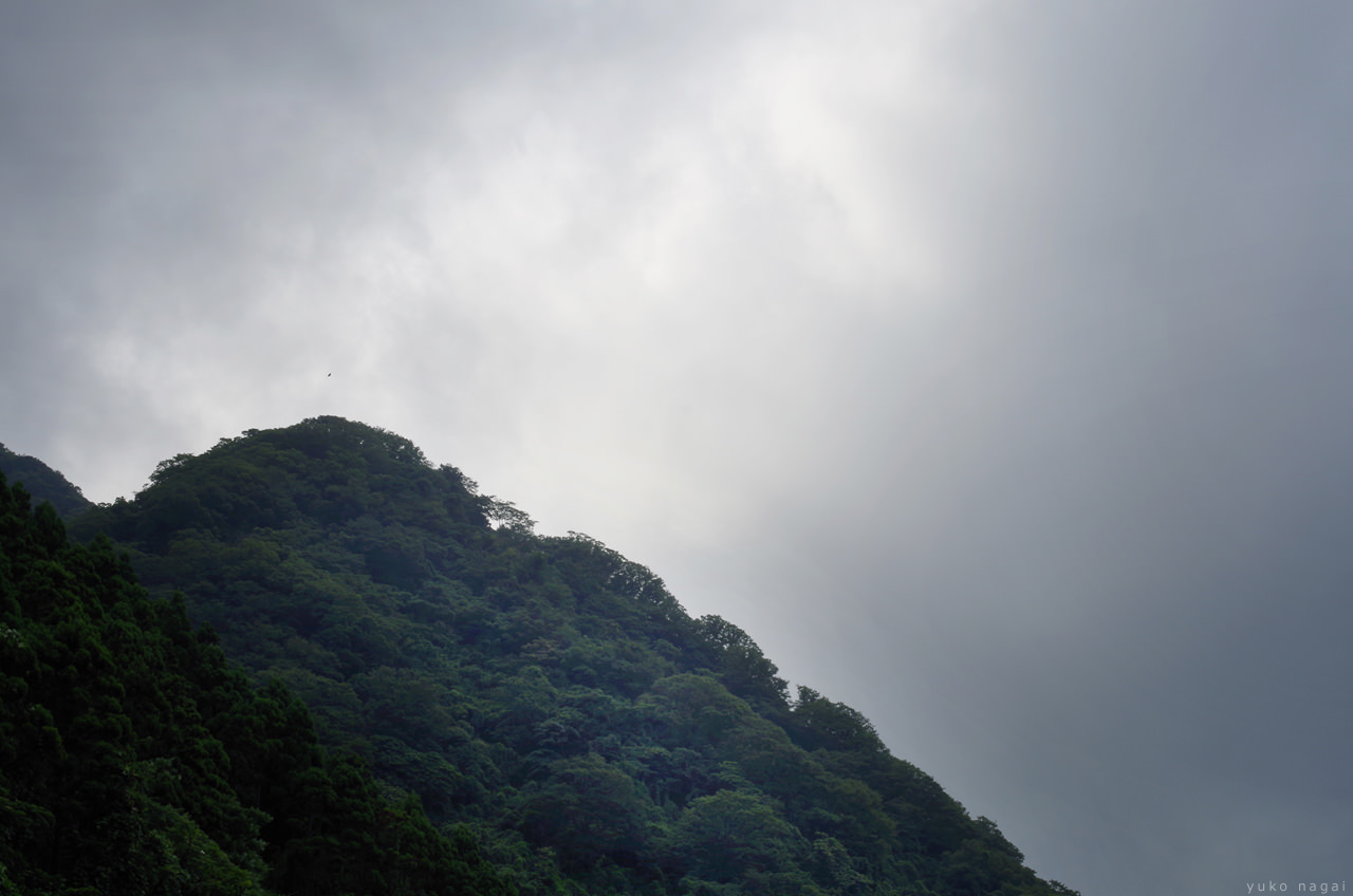 Mountain with green trees.