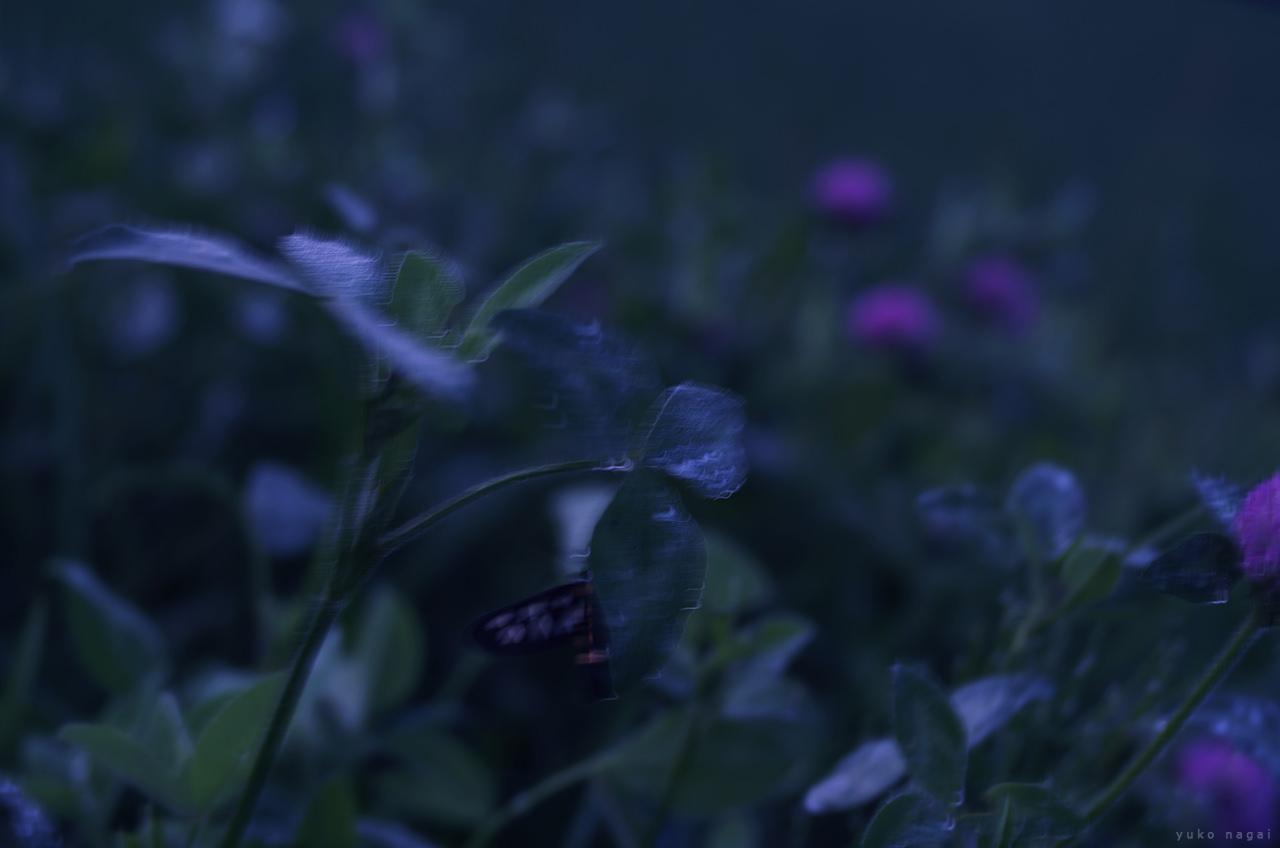 Wild summer flowers.