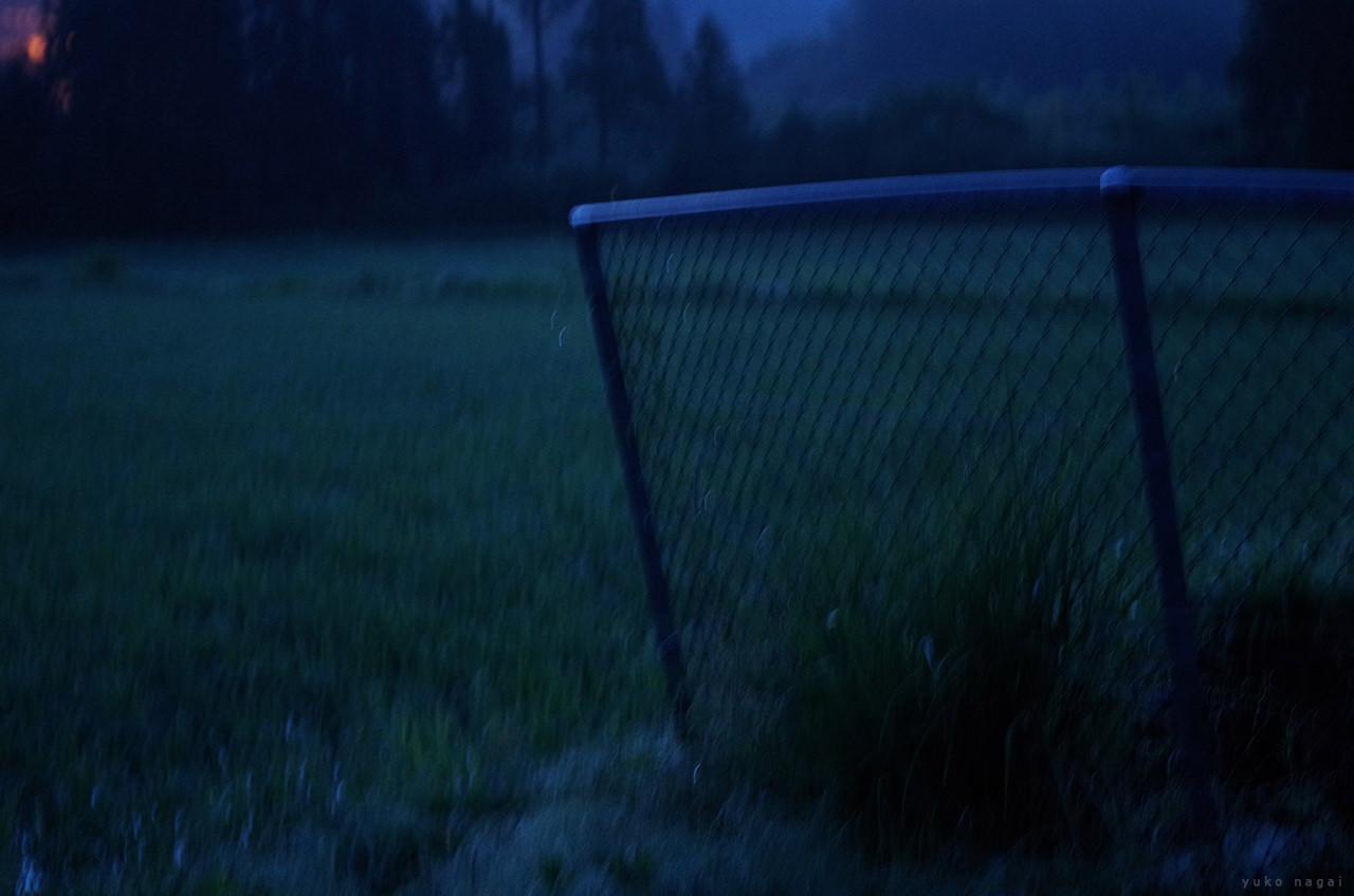 Summer field at dawn.