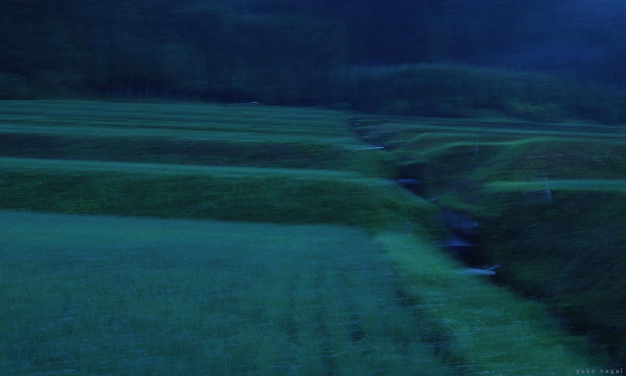 Rice field at dawn.
