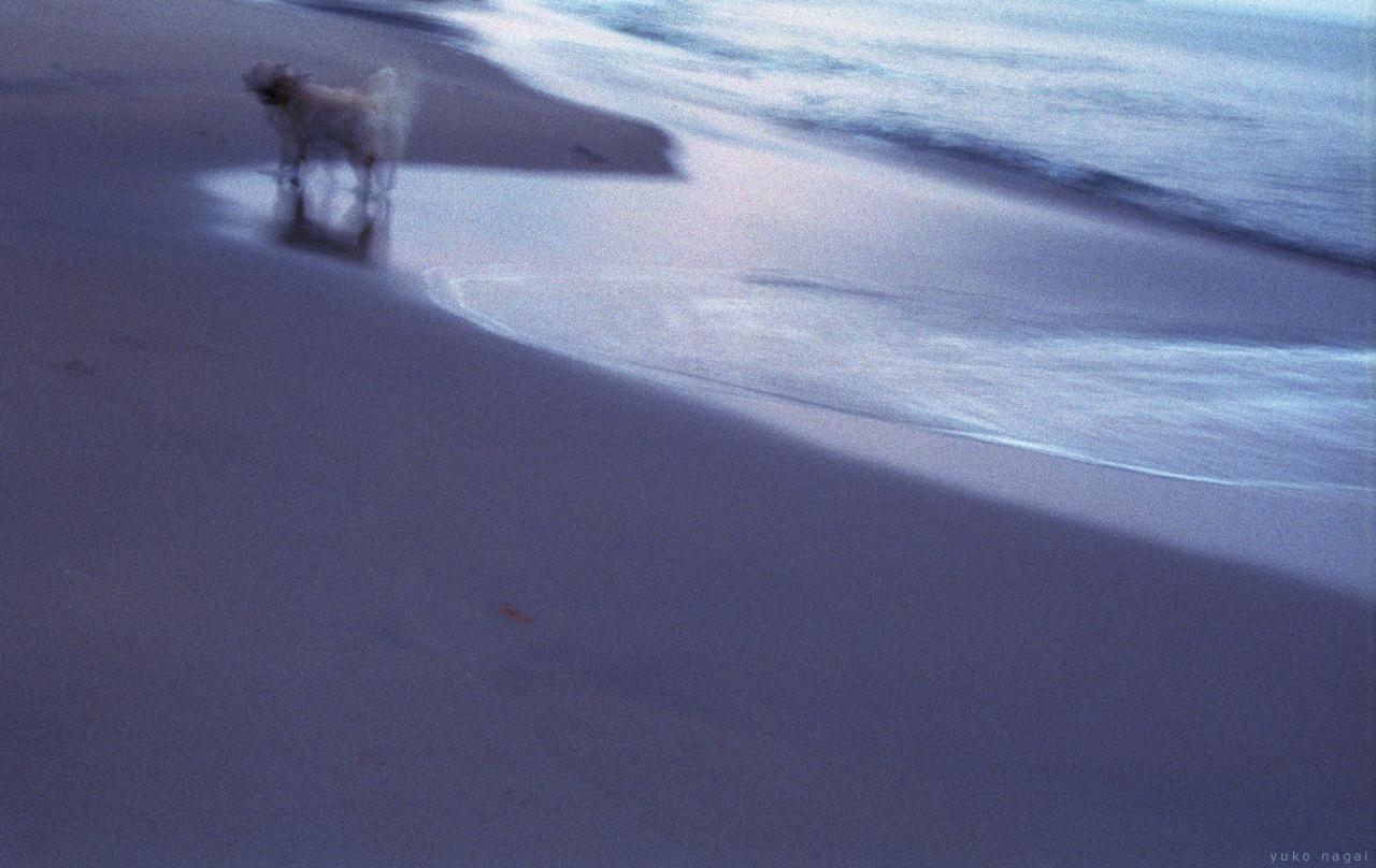 A dog at a sunset sea shore.