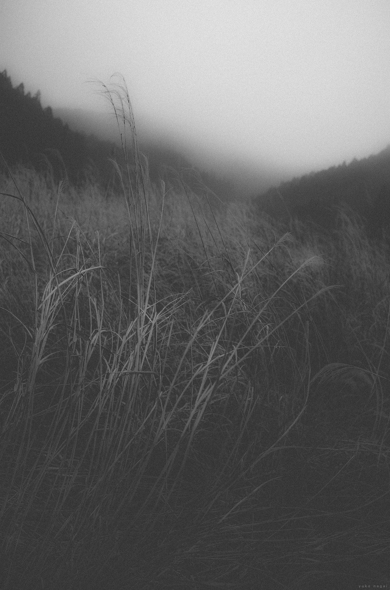 Grassy field.